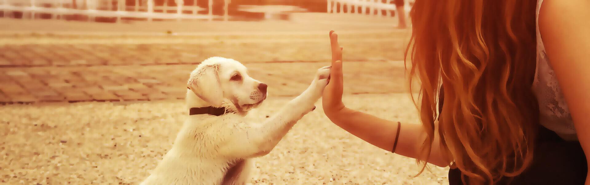 Hundeschule Header Bild
